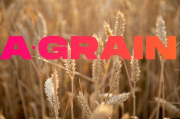 a-grain.jpg (28 KB)