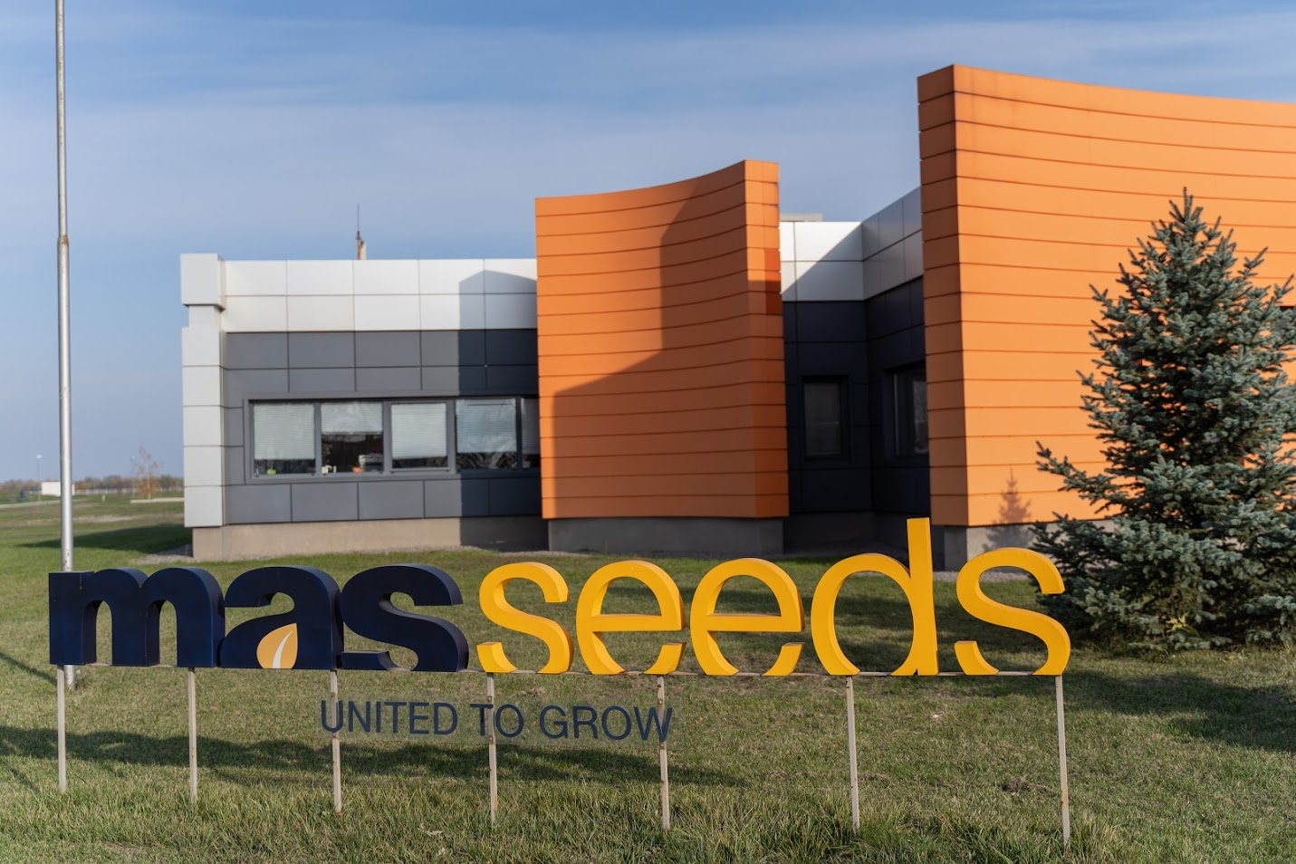 mas_seeds.JPG (293 KB)