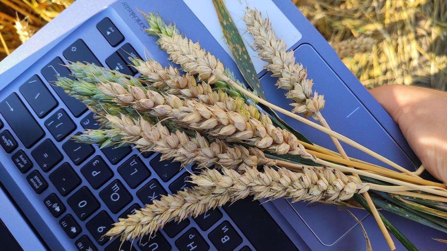 notebook.jpg (358 KB)