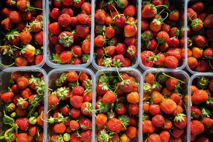 strawberry work in Poland.jpg (241 KB)